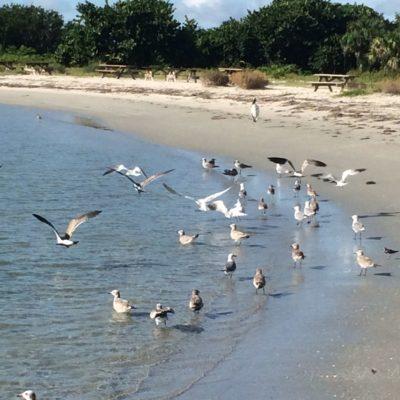 Sebastian Inlet State Park | Florida Travel