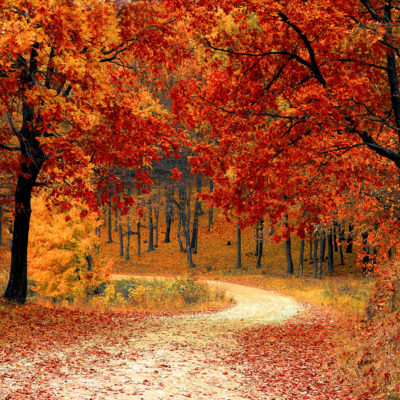 Tips to Plan a Fall Day Trip to Experience the Season
