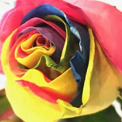 Roseshire x Disney Wonderland | Giveaway
