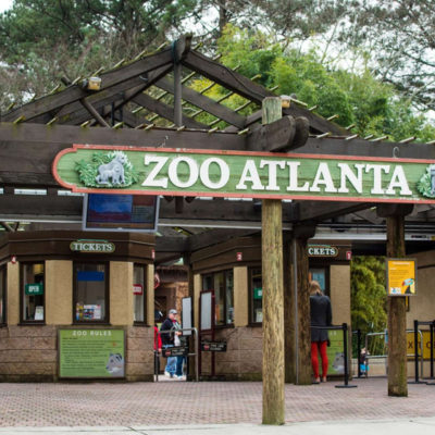 5 Tips for Your First-Time Zoo Atlanta Visit