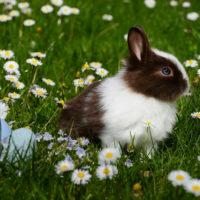 Printable Easter Scavenger Hunt (Play Inside & Outside)