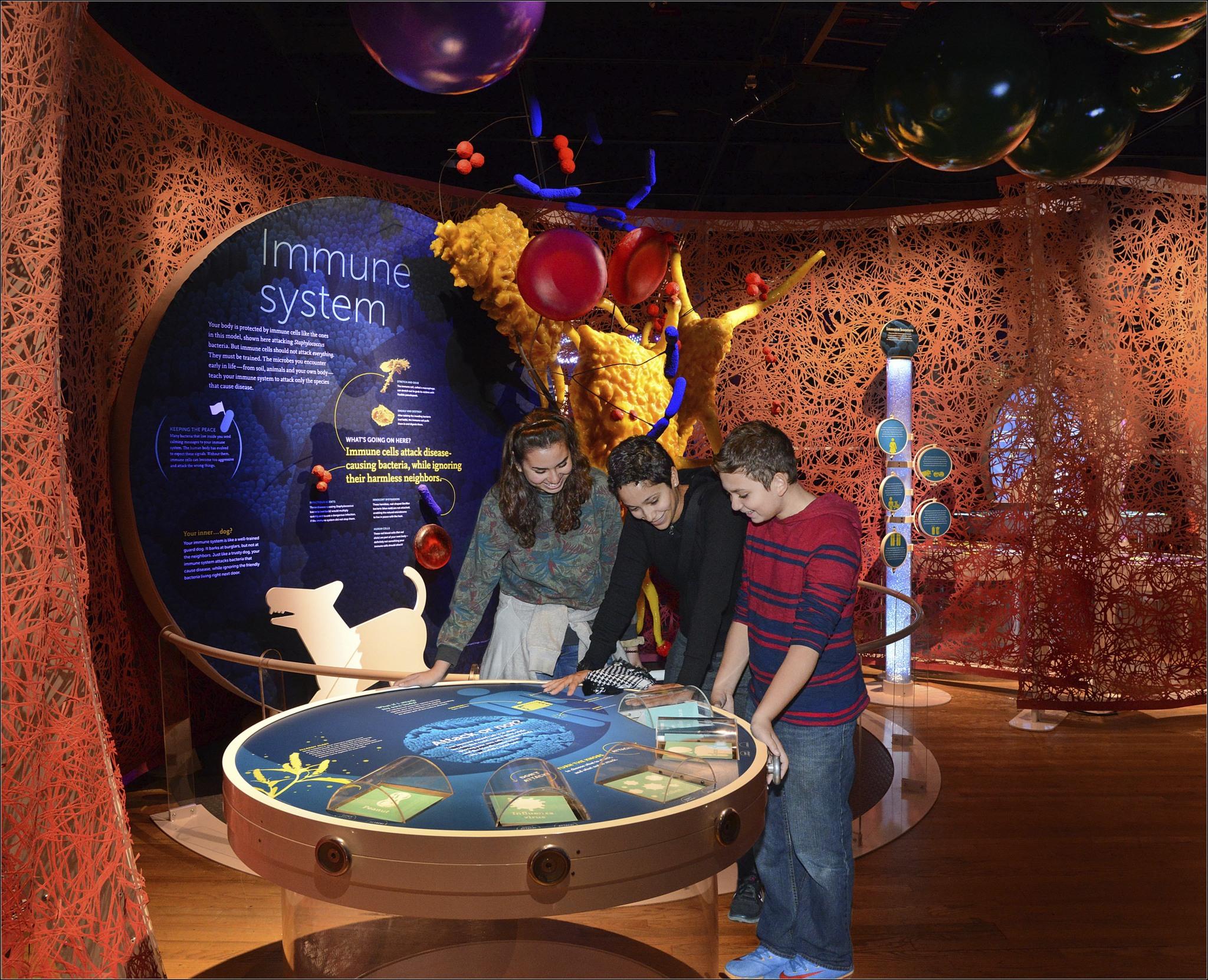Fernbank Museum Exhibit