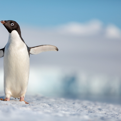 NEW Disneynature 'Penguins' Trailer Drops on Earth Day