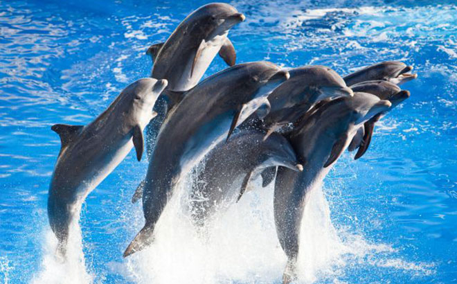 SeaWorld Orlando, SeaWorld Orlando Discounted Tickets