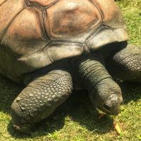 Zoo Atlanta Wild Encounters, Zoo Atlanta Tips, Zoo Atlanta Wild Encounters Review, Zoo Atlanta Expereinces