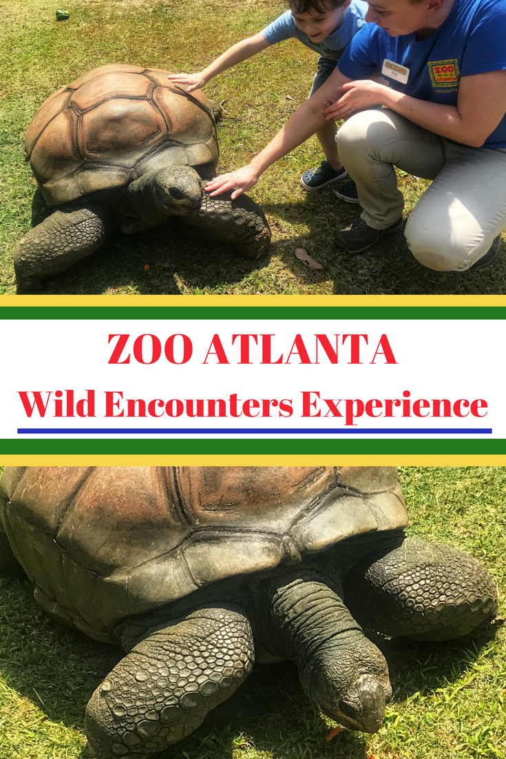 Everything you need to know before signing up for Zoo Atlanta's Wild Encounters experience. Find out if it's worth it, how much it costs and how to prepare. #OnlyZooATL #ZooAtlanta #Atlanta #FamilyTravel