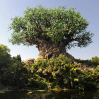 Animal Kingdom Keto Guide for Walt Disney World Dining