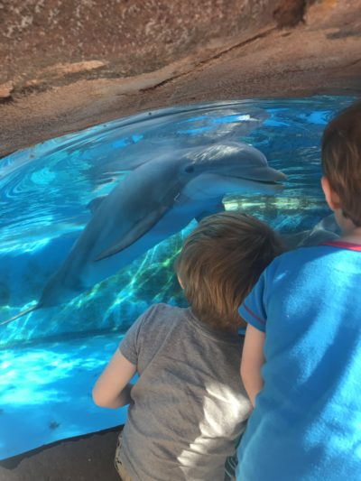 SeaWorld Orlando Toddler Attractions, SeaWorld Orlando, SeaWorld Orlando With Preschoolers, SeaWorld Orlando Tips