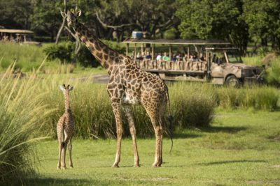 Animal Kingdom Itinerary, Planning A Day At Disney's Animal Kingdom, Rides at Disney's Animal Kingdom Park, Animal Kingdom Park Guide