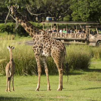 The Best Animal Kingdom Itinerary: A Park Guide For Walt Disney World