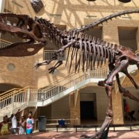 The Fernbank Museum of Natural History: An Atlanta Must-Do