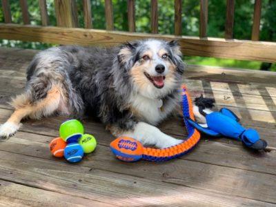 Nerf Dog Toys, Durable Dog Toys, Nerf Dog Products, Dog Chew Toys That Last