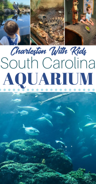 Wondering what to do in Charleston SC with kids? Visit the South Carolina Aquarium! Read expert tips on can't miss South Carolina Aquarium exhibits that kids will love. #Charleston #FamilyTravel #Travel #SouthCarolina #TravelingWithkids