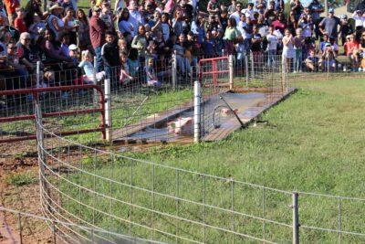 Southern Belle Pig Races, Southern Belle Farm Atlanta