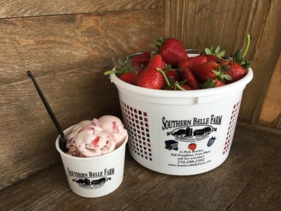 U-Pick Strawberries at Southern Belle Farm, Southern Belle Farm Atlanta, Atlanta Family Farm