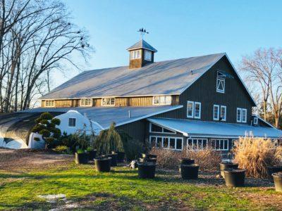 Scottsdale Farms, Milton Farms, Atlanta Christmas Trees, Where To Buy A Real Flocked Christmas Tree in Atlanta
