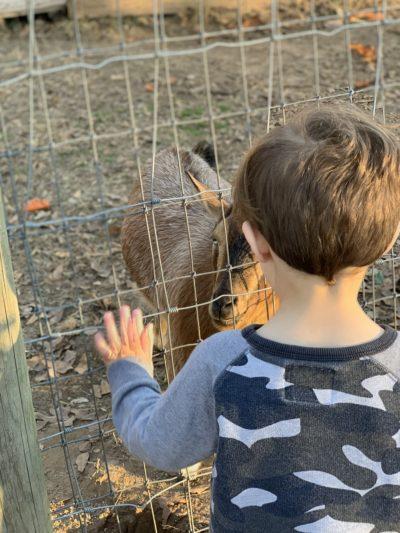 Atlanta Farms, Atlanta Christmas Tree Farms, Best Atlanta Farms