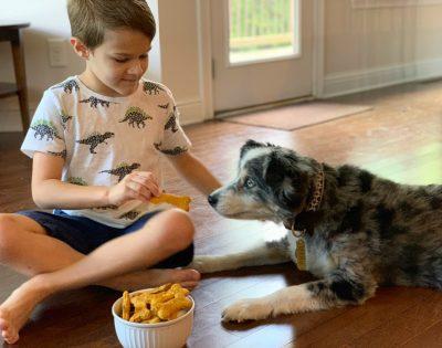 Pumpkin Dog Bones, Pumpkin Dog Treats