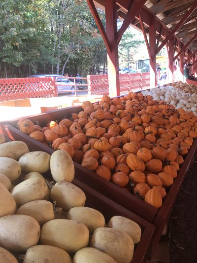 Gourds, Squash and Indian corn at Burt's Farm