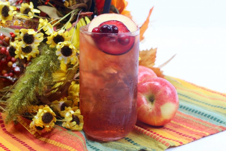 Plum Apple Cider Toddy Recipe (Fall Cocktail)