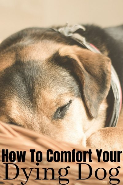 9 tips for comforting your dying dog, from home, with natural options. #Dogs #Pets #DogTips #DogsandPuppies